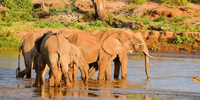 Reserva Nacional Samburu